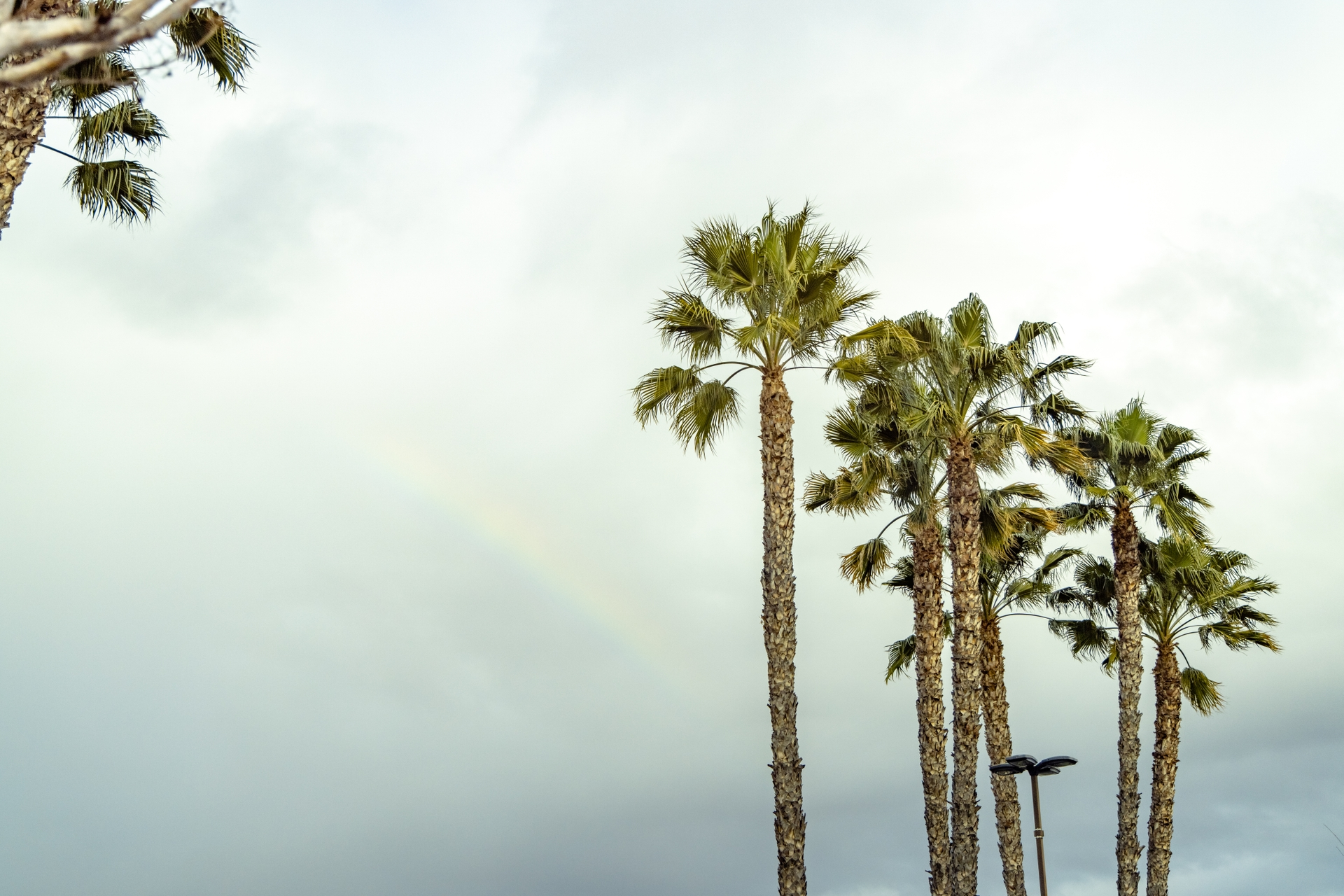 Palm trees cause power outages across SCE's service area regularly.