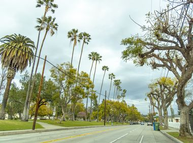 Some Palm Trees to Be Removed to Prevent Wildfires