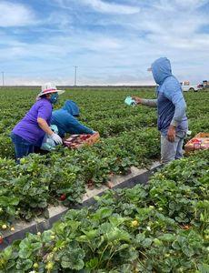 Los trabajadores agrícolas en situación de riesgo reciben ayuda económica de la Fundación Blue Shield of California para luchar contra el COVID-19