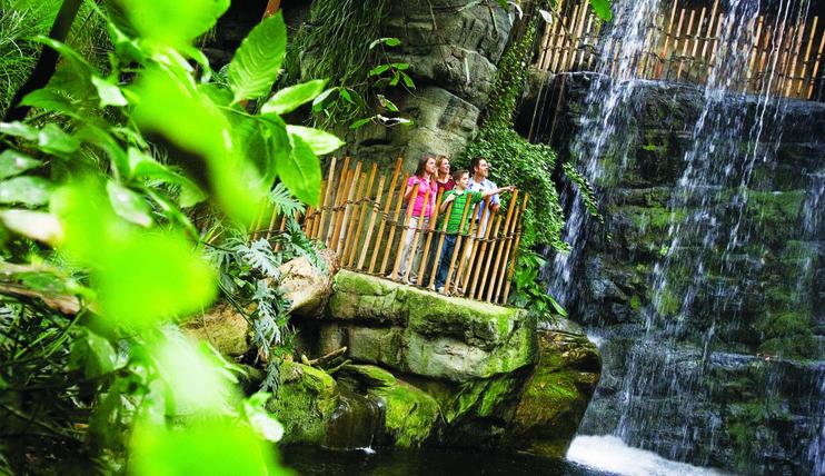 World_s Largest Indoor Rainforest