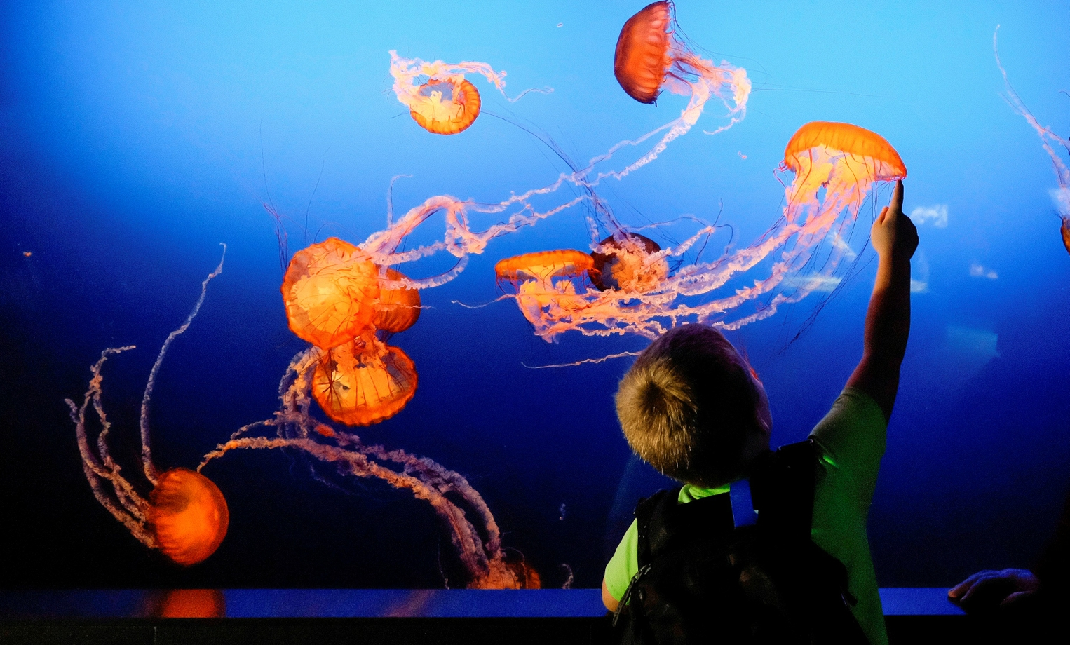 "Omaha's Henry Doorly Zoo Listed in TripAdvisor's ""15 Top Aquariums in the U.S."""