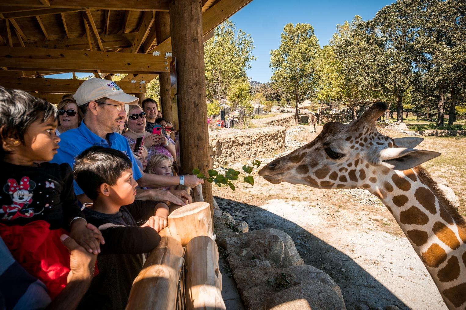 Omaha Zoo_Giraffe