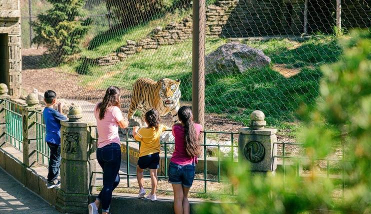 Asian Highlands Tiger Omaha Zoo s