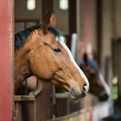 Equine influenza spreads rapidly among horses.