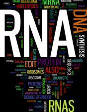 logo for RNA biology
