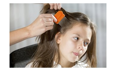 Head Lice: Scratching Below the Surface