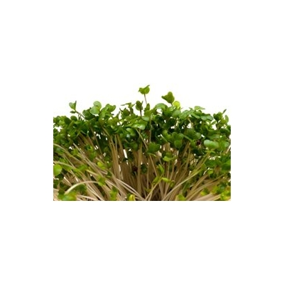 Broccoli Sprout Extract May Help with Autism