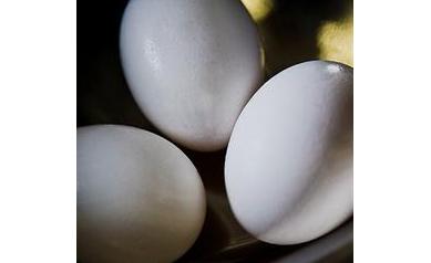Eggs_3062_404x404