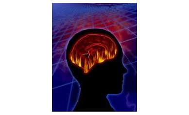brain%202%20web_3428_350x450