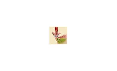 URMC Offers New Implantable Heartburn 'Ring'
