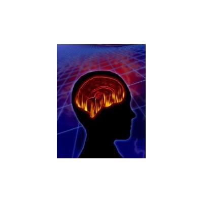 1600185537_brain%202%20web_3598_348x448