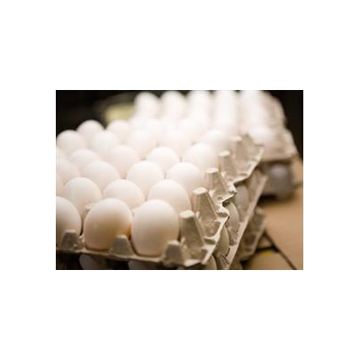 1103019292_Eggs_3617_322x234