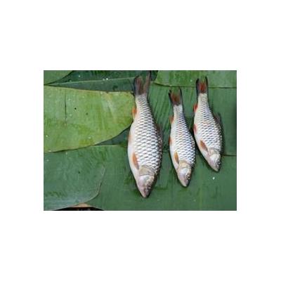1357457414_seychelles%20fish%20web_3893_469x341