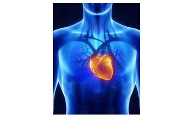 1415152032_body_heart_4038_352x453