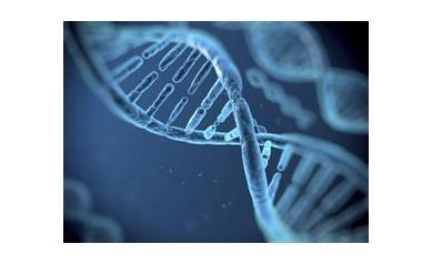 1405313928_DNA_4207_440x320
