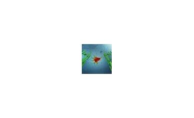 1542592863_JC%20virus%20astrocyte_4209_340x340