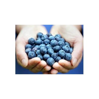 1301593773_Blueberries_4324_381x277