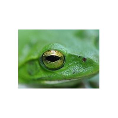 1152524171_frog_4488_330x240
