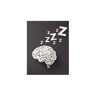 1420481192_sleep%20brain_4559_344x442
