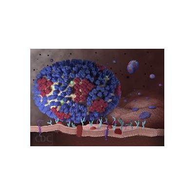 1013098064_influenza-virus-CDC_4643_2671x1943
