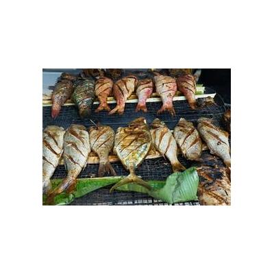 1200311251_fish_seychelles_5303_466x339