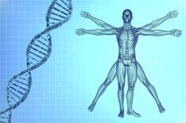 Vitruvian man with DNA helix