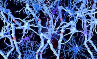 Animal Study Shows Human Brain Cells Repair Damage in Multiple Sclerosis