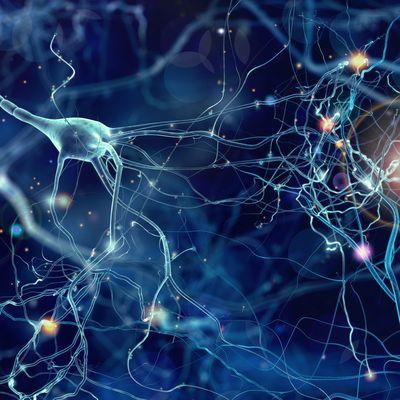 Fragile X Syndrome_Nerve Cells