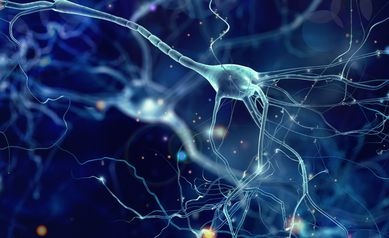 Beneath the Surface of Fragile X Syndrome: Study Sheds Light on What's Happening in Nerve Cells