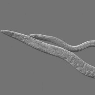 Study: Biology Blurs Line Between Sexes, Behaviors
