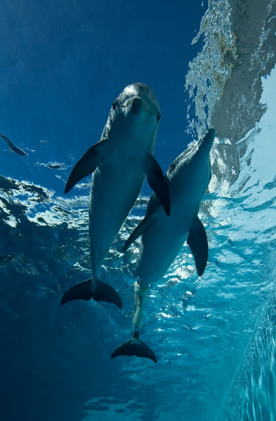 Clearwater_dolphins