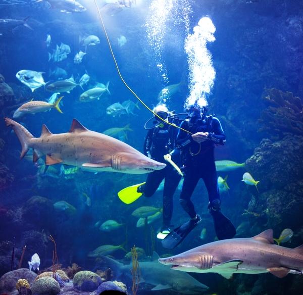 FloridaAquarium_Divers