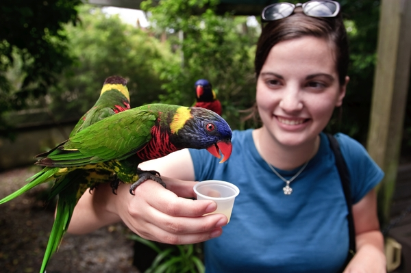 ZooTampa at Lowry ParkLorikeets