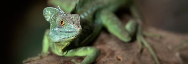 carousel-atlantazoo-lizard