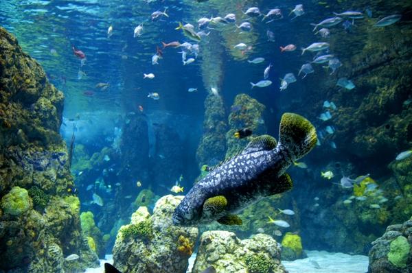 aquarium016