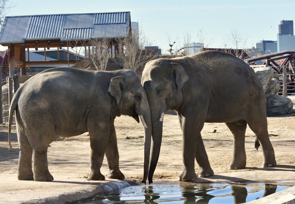 20180114_ELEPHANTS_#1_BB