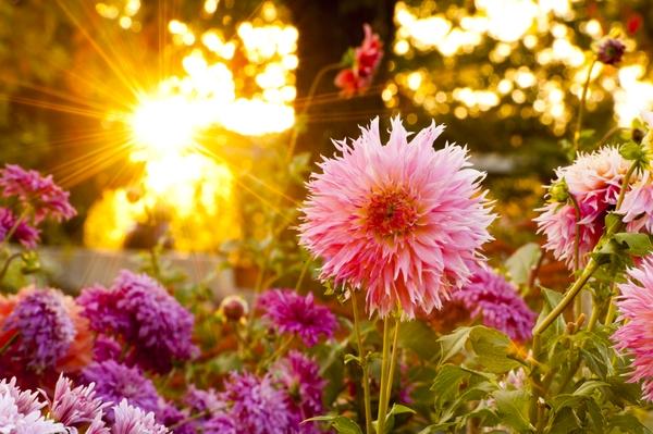 20111014_autumn_036