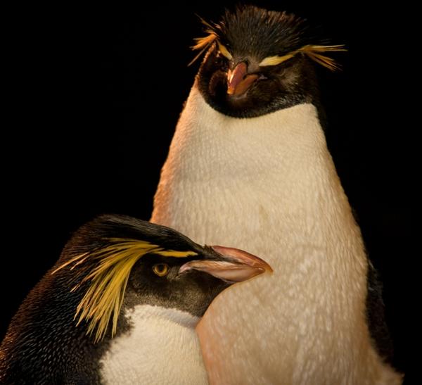 NewEnglandAquarium_penguins
