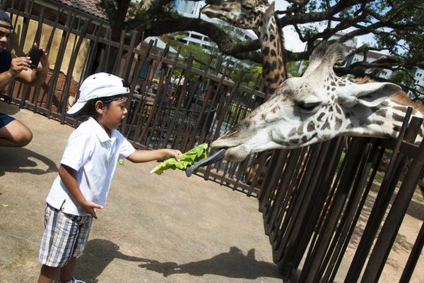 Giraffe_Feeding-0031-5582