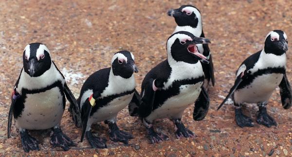AdventureAquarium_Penguins