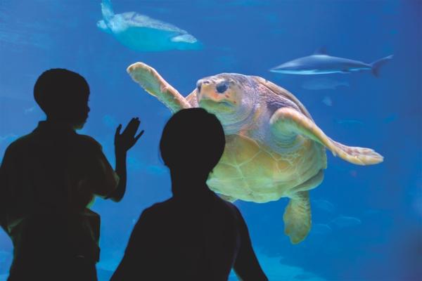 AdventureAquarium_turtle