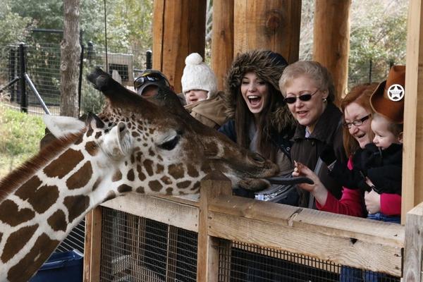 _MG_4029-Giraffe feeding platform People from Lousiana