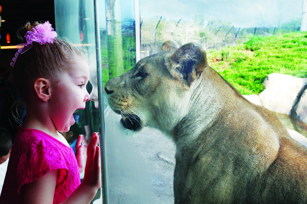 IMG_4650Lion nose to nose with little girl-4x6