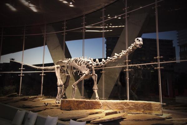 PerotMuseum-Malawisaurus