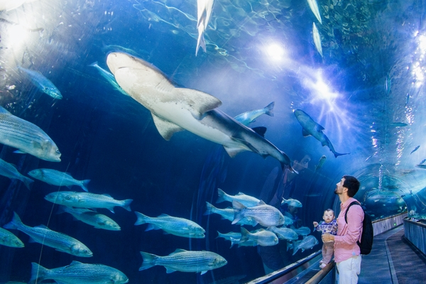 AquariumOfTheBay_shark