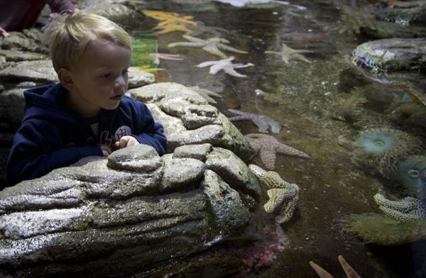 AquariumOfTheBay_child