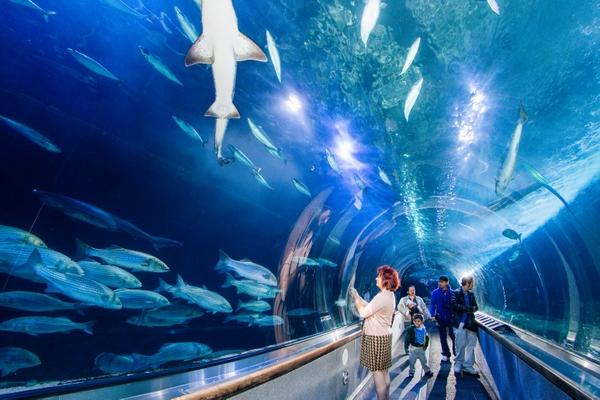 AquariumOfTheBay_tunnel