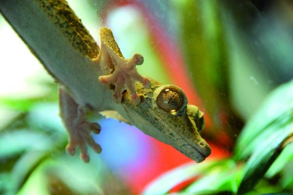 CalAcademy_lizard