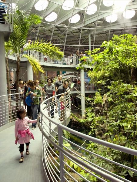 CalAcademy_rainforest