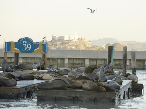 PIER 39 K-Dock